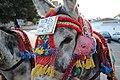 Donkey Taxi Number 32 - Mijas - Malaga - Andalucia - Spain - panoramio.jpg