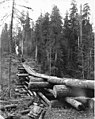Donkey engine at end of skid road built on top of a log trestle, Wynooche Timber Company, near Montesano, ca 1921 (KINSEY 1598).jpeg