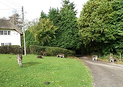 Donkeys on the green at Hyde - geograph.org.uk - 2677447.jpg