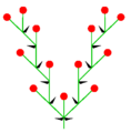 Doppelwickel (inflorescence).PNG