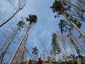 Drevje - panoramio (1).jpg
