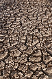 Dry earth in the Sonora desert, Mexico.
