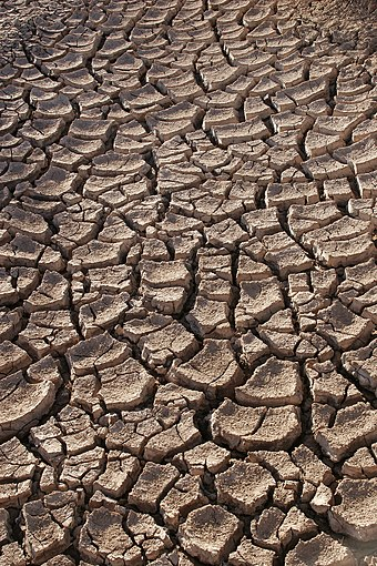 Contraction/Desiccation cracks in dry earth (Sonoran desert, Mexico). Drought.jpg