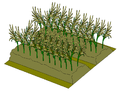 Dry Lands Paddy Field Illustration (Fully-Grown).png