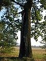 Drzewny wandalizm.jpg