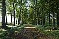 Dubbele lindendreef van het verdwenen Kasteel Puttenberg te Pepingen - 370112 - onroerenderfgoed.jpg