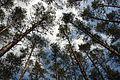 Duboovka Forest 71-249-5012 SAM 7681.jpg