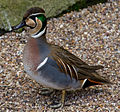 Duck 3d (6967043646).jpg
