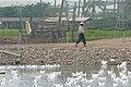 Duck farming at Huwei 20080520 19.jpg