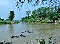 Dudhnoi River in Goalpara district.jpg