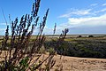 Dunas y vegetación del Parque Natural Doñana.jpg