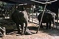 Dunst Myanmar 2005 03.jpg