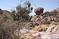 Dunst Namibia Oct 2002 slide119 - wenig Wasser.jpg