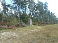 EB FL 40 Ocala National Forest; USFS Stone-2.jpg
