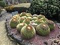 Echinocactus grusonii - Parc Exotica-1.jpg