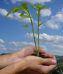 Two hands holding a plant in it with a sky background. The article is about plants and lessons of economics we can learn from plants.
