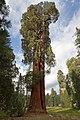 Ed by Ned - 2 Trees (6160589201).jpg
