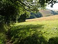 Edge of small wood near Ritson - geograph.org.uk - 210432.jpg