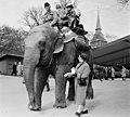 Elefanten Bambina.jpg