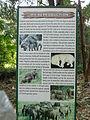 Elephant reproduction.JPG