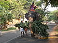 Elephant walking to Guruvayur for 'Anayottam'.JPG