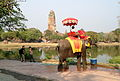 Elephant with Wat Phra Ram in the background (8523720674).jpg