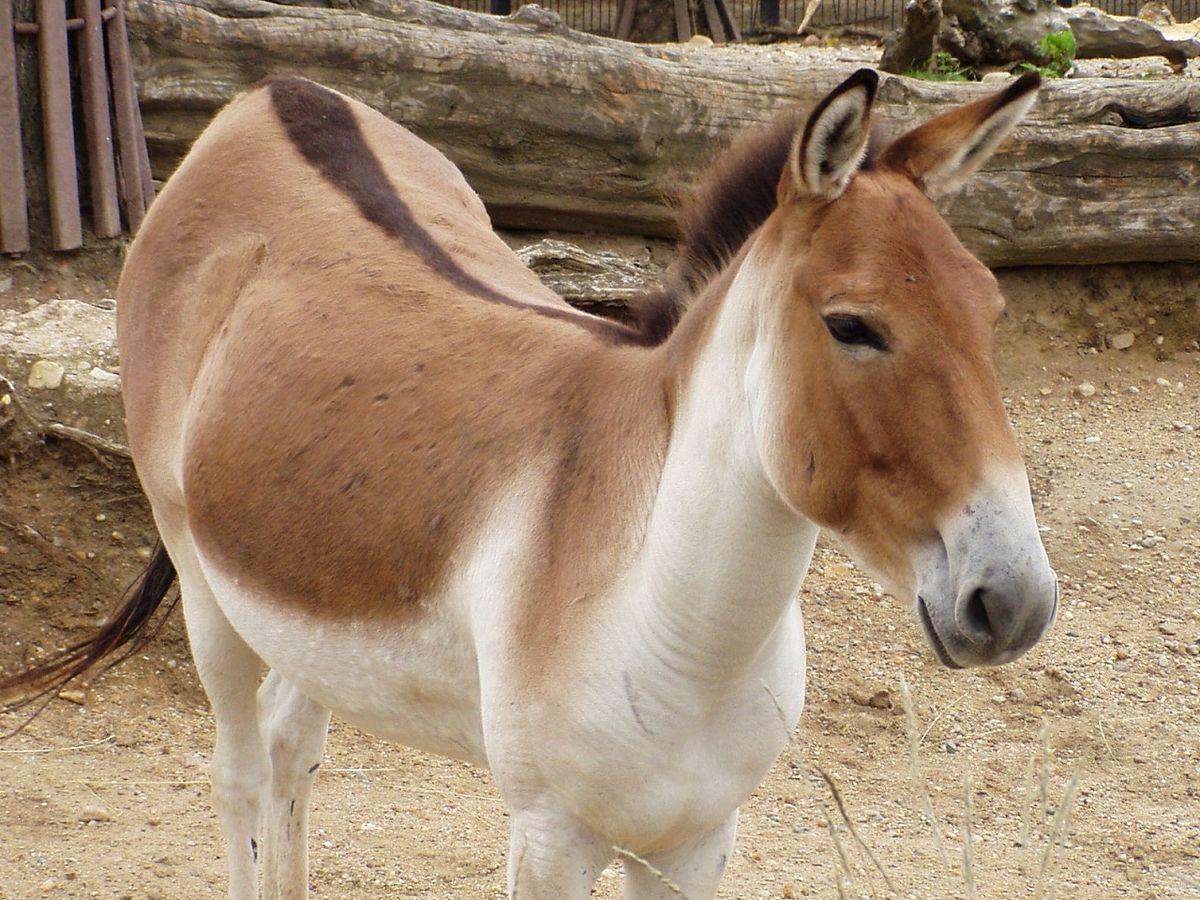 equus notes 264 notes reblog frost creek farms equus sims equus community sims 3 stall kullaberg swedish warmblood bloodbuzz ohio 48 notes reblog.