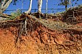 Erosion Red Cliffs of Scarborough 20Aug17-05 (36285142890).jpg