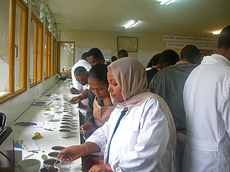 Coffee production in Ethiopia - A training seminar for coffee tasters (cuppers) in 2003