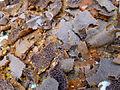 Ethiopie-Injera grillé.jpg