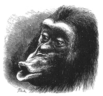 Figure 18 from Charles Darwin's The Expression...