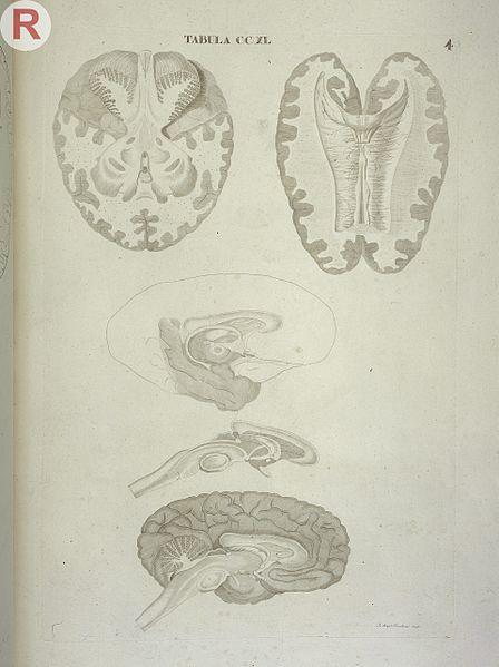 File:F. Caldani, Icones anatomicae quotquot sunt Wellcome ...