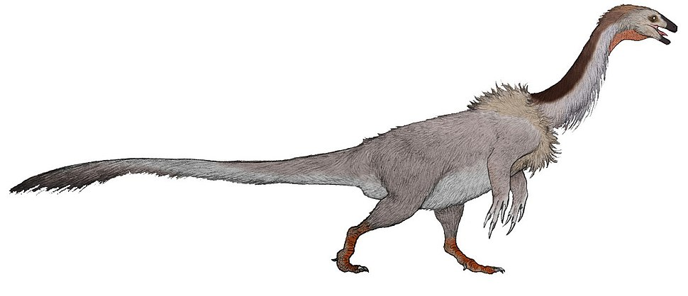 F. utahensis reconstruction (flipped)