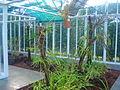 FAI HOR Fla BotanicalGarden Orchidarium interior.jpg