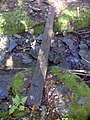 FLT M27 8.2 mi - Puncheon over reliable stream, 2x8 board 11.5' long, marked 'slippery' at both ends, 2' to drainage - panoramio.jpg