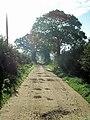 Farm track and footpath - geograph.org.uk - 271849.jpg