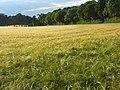 Farmland, Bledlow - geograph.org.uk - 892888.jpg
