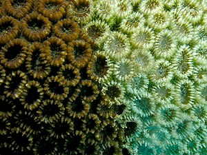 How Coral Bleaching Could Lead to Famine