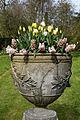 Feeringbury Manor urn planted tulips, Feering Essex England 2.jpg