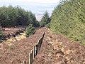 Fence Line - geograph.org.uk - 759591.jpg