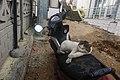 Feral cat in Fethiye 2020-03-15-1.jpg