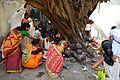 Ficus religiosa Puja - Sibpur - Howrah 2012-10-20 0865.JPG