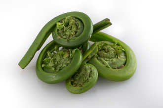 Fiddlehead fern - Fiddlehead ferns