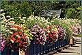 Fleurissement à Lauw (2013) - panoramio.jpg
