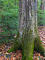 Flickr - Nicholas T - Fishing Creek Nature Preserve (3).jpg