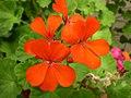 Flora at the Mukteshwar, District Nainital, Uttaranchal.jpg
