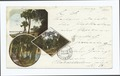 Florida-Rockledge-Indian River-Orange Grove-The Walk (NYPL b12647398-62015).tiff