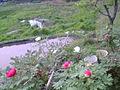 Flower0057.jpg