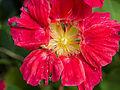 Flower (14684236797).jpg