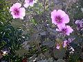 Flowering bush.JPG